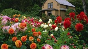 Preview wallpaper flowers, garden, trees, house, nature 1920x1080