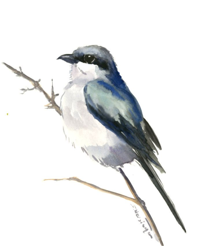 loggerhead shrike painting original watercolor painting grey bird rh pinterest com