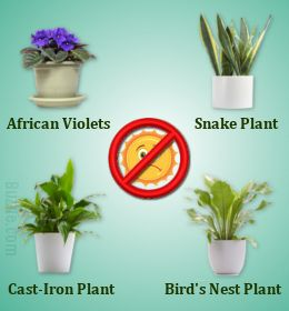 indoor plants that thrive in low, & indirect light.