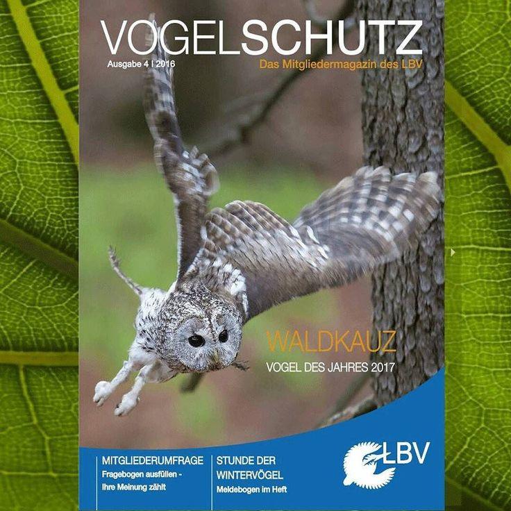 Unser aktuelles #Magazin dreht sich vor allem um den #Waldkauz - Vogel des Jahres 2017. Daneben haben wir für euch die Porträts aller in #Bayern vorkommenden #Eulenarten zusammengestellt. Mit dem E-Paper könnt ihr diese und viele andere spannende Themen auch online ansehen. Viel Spaß beim Lesen! www.lbv.de/magazin  #eulen #eule #tawnyowl #bavaria #vogeldesjahres #vdj #vdj2017 #vogeldesjahres2017 #birdoftheyear #birdsofinstagram #instabirds #instabird #naturschutz #natur #nature…