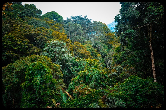 A view of the Forest close to Armenia, Colombia