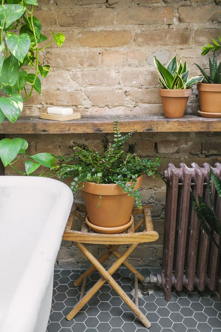 How to Make Bathroom Plants Work with