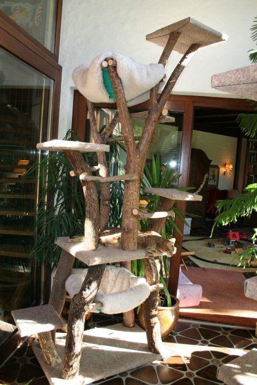 313 besten cat trees bilder auf pinterest katzenm bel haustiere und katzenbaum. Black Bedroom Furniture Sets. Home Design Ideas