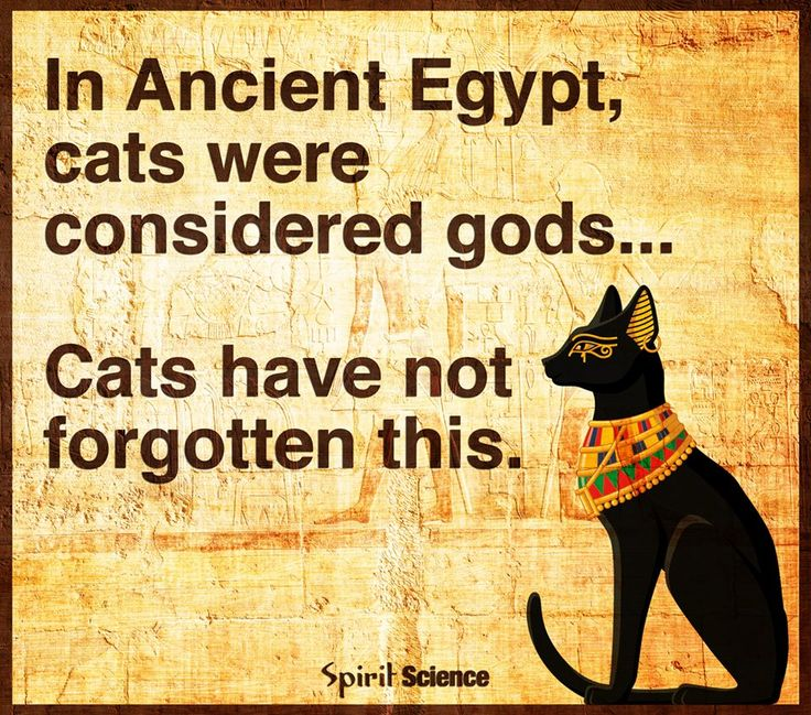 In ancient Egypt cats were considered gods.  They have not forgotten this.