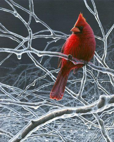 Mark Mueller Wildlife Art - cardinal