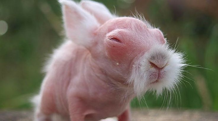 Hairless Animals Which Might Make You Feel Scared