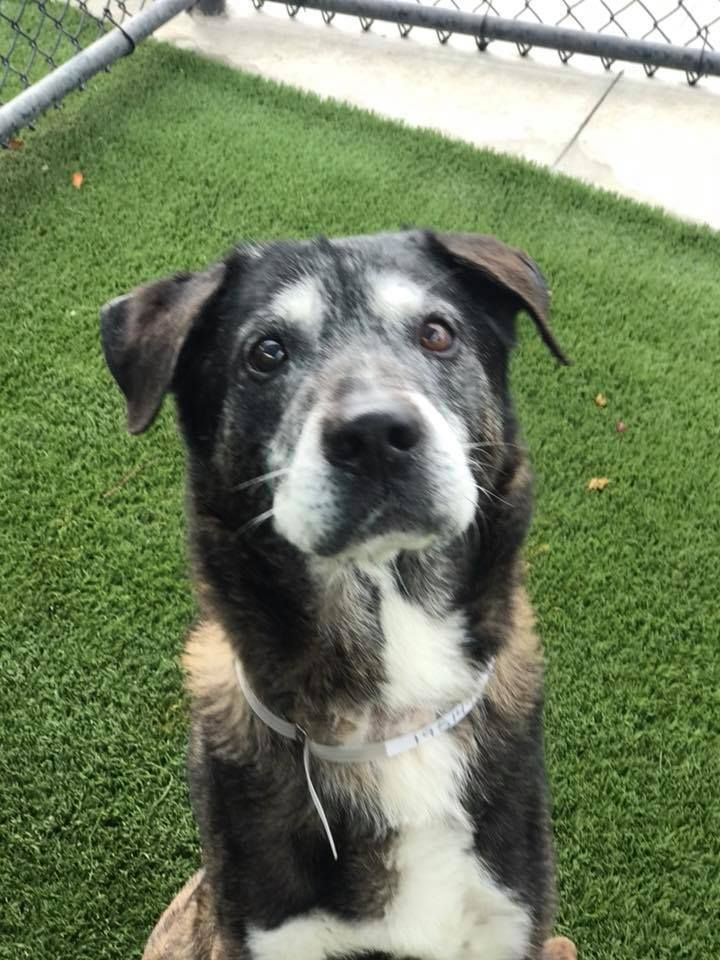 Miami Fl Johhny Is A Mixed Breed Senior Dog Who Is Sitting In A