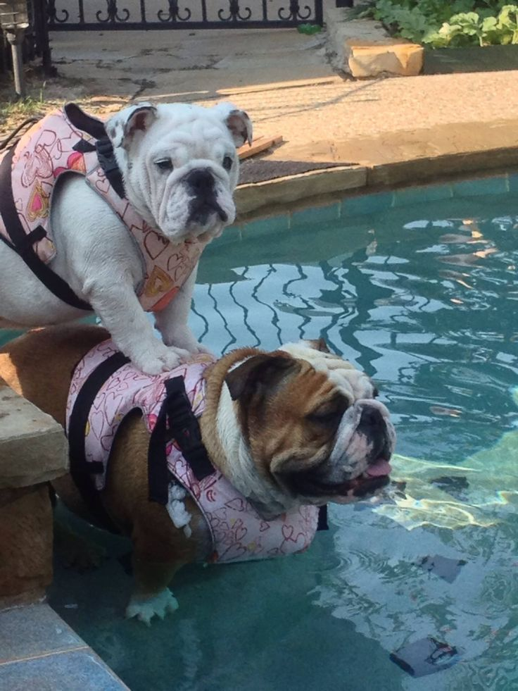 bulldog life vest 25 best ideas about life guard on pinterest beach 6414