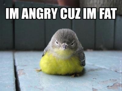 im angry cuz im fat haha