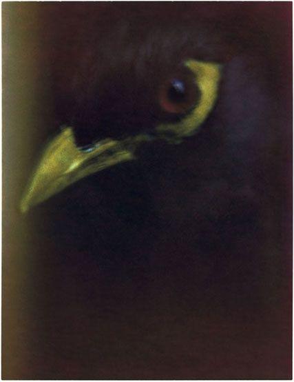 sarah moon bird - Google zoeken