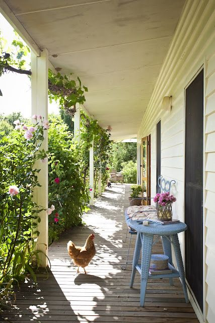 Chickens on the Porch...Now that's country living!