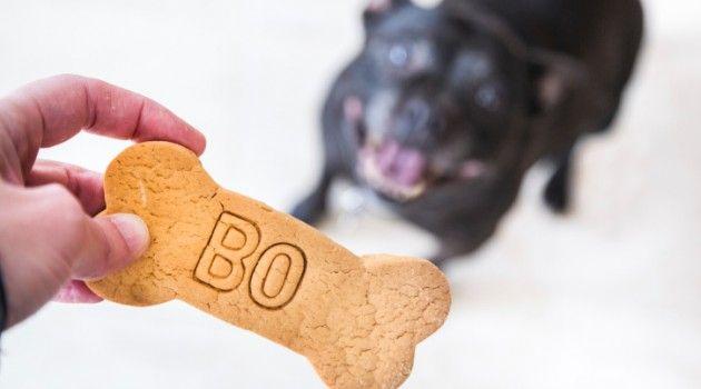 Apesar de os cachorros possuírem um nome científico muito chique, não temos como chamá-los de Canis lupus familiaris no dia a dia. Então, qual é o nome que mais combina com seu novo animal de estimação?