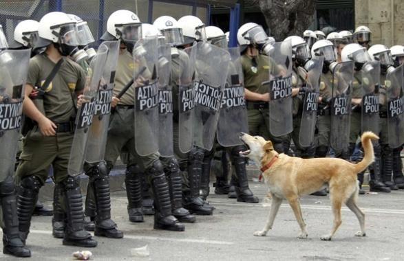 Kanellos(Cannella), un cane che è stato visto in quasi ogni manifestazione ad Atene nel corso degli ultimi due anni. In rete è ormai una celebrità.   E' sempre in prima linea nelle proteste di piazza ad Atene: è un meticcio che sta con i ragazzi del Politecnico della capitale, lì dove il fronte anarchico è più forte. Passeggia tra i banchi...In ogni caso, quando c'è da manifestare sotto l'Acropoli lui non manca mai. Gli scatti delle importanti agenzie di stampa internazionali, da Reuters…