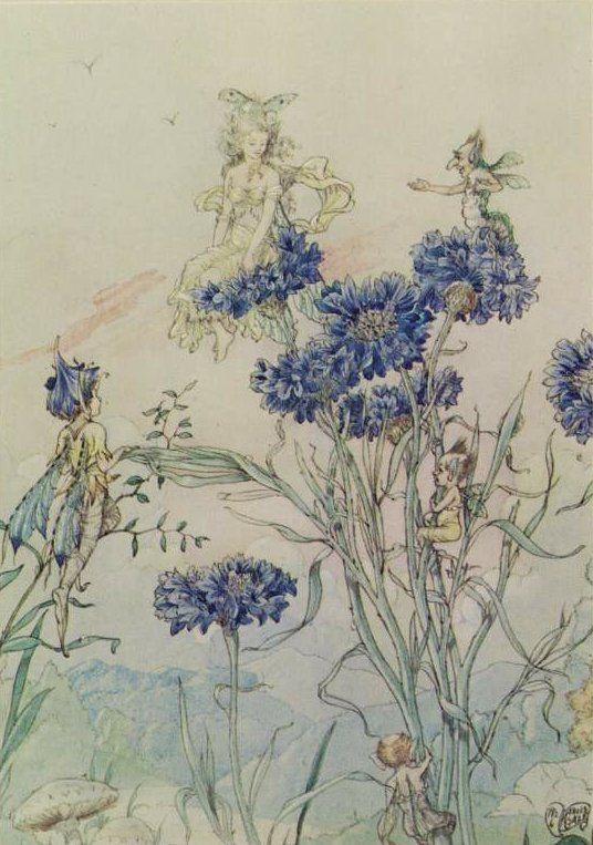 .: Arthur Rackham, Cornflower Fairies, Blue Fairies, Faeries Friends, Fairies Drawings, Harold Gazing, Fairies Art, Faeries Inspiration, Fairies Tales