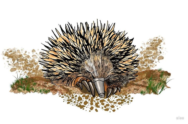 echidna digging by elee