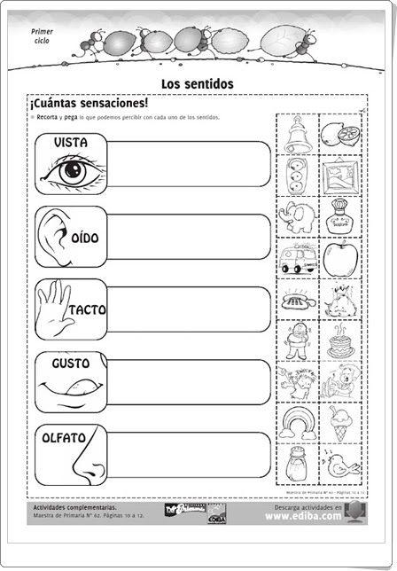 """""""Los sentidos"""" es una magnífica ficha de trabajo, de ediba.com, para contribuir en el aprendizaje sobre los sentidos en 1º y 2º niveles de Educación Primaria."""