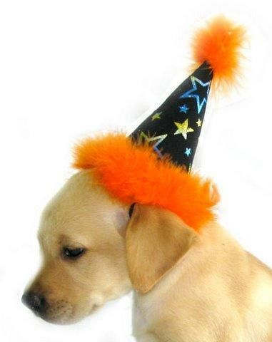 Halloween Dog Party Hat