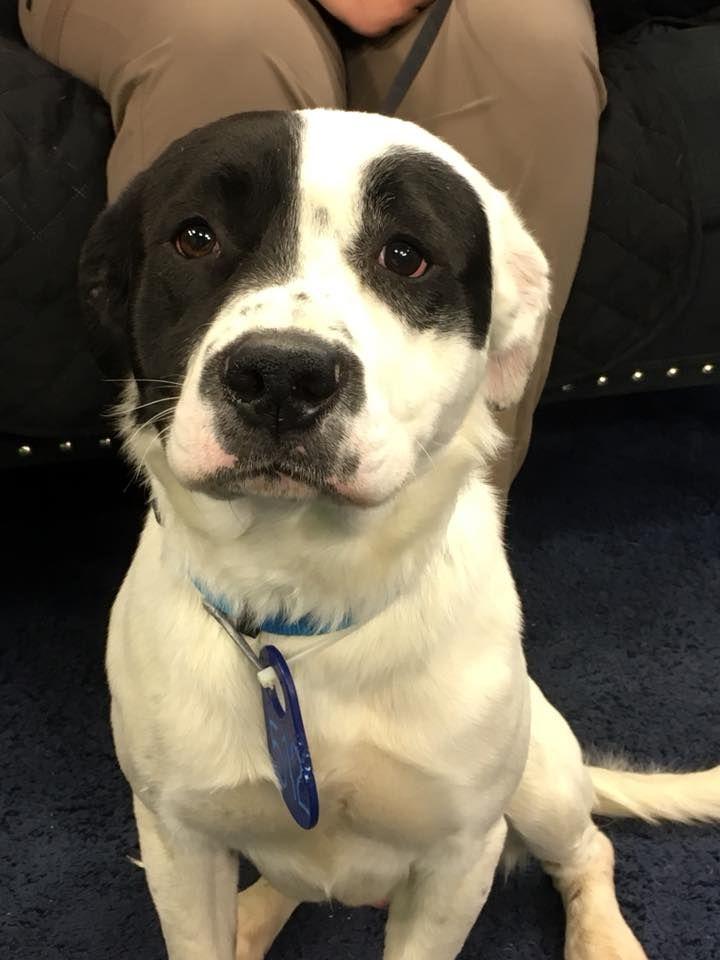 Meet Him At The Lubbock Animal Shelter Adoption Center Watch Klbk
