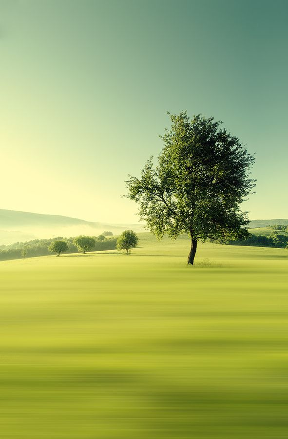 Green morning by Martin Smolak