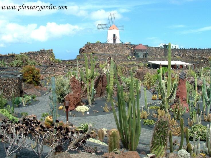 jardin de cactus lanzarote con el antiguo molino de viento