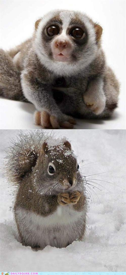 cute animals - Squee Spree: Loris vs. Squirrel. If it's just between these two pictures, Loris wins just for pure adorable goofiness.: Cute Animal