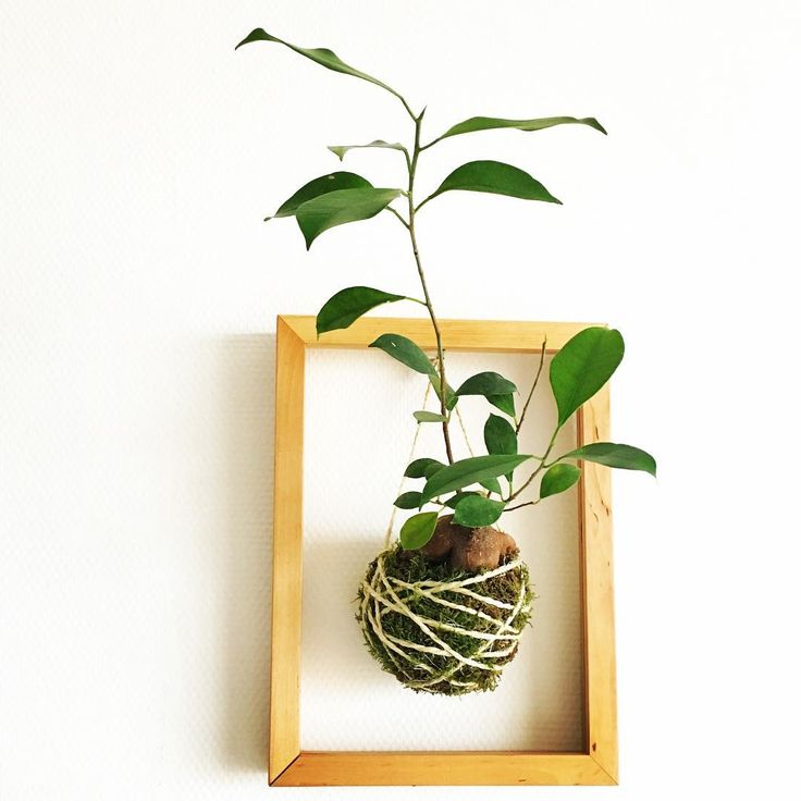 10 photos that prove kokedama is the best plant trend for Indoor gardening trends