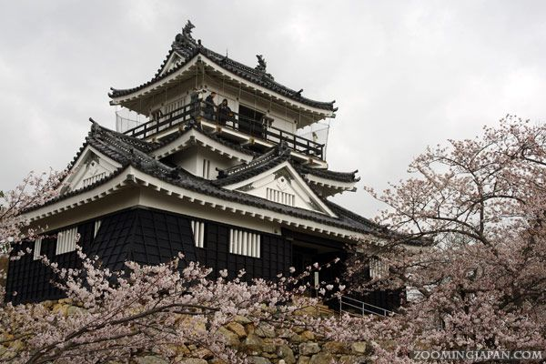 Hamamatsu Castle is a great spot for cherry blossom viewing in spring! It was also the headquarter of the first shogun: Tokugawa Ieyasu - who stayed there for 17 years while fighting a few of his most important battles.