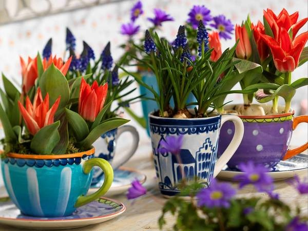 Learn potted tulip care, planting and use for sensational spring scenes.