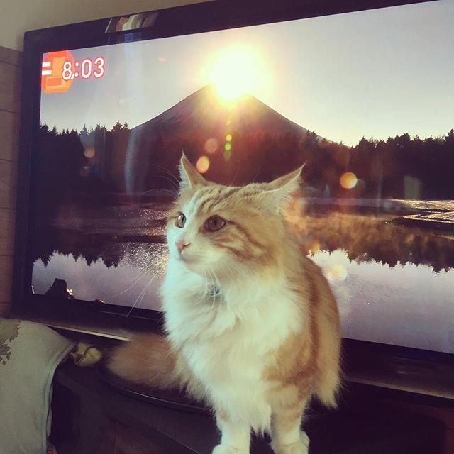 あけましておめでとうございます♪ 今年も良い年になりますように☆  #初日の出(テレビ越しw) #ダイヤモンド富士 #愛猫 #猫に起こされたw  #まだ眠い #謹賀新年2017