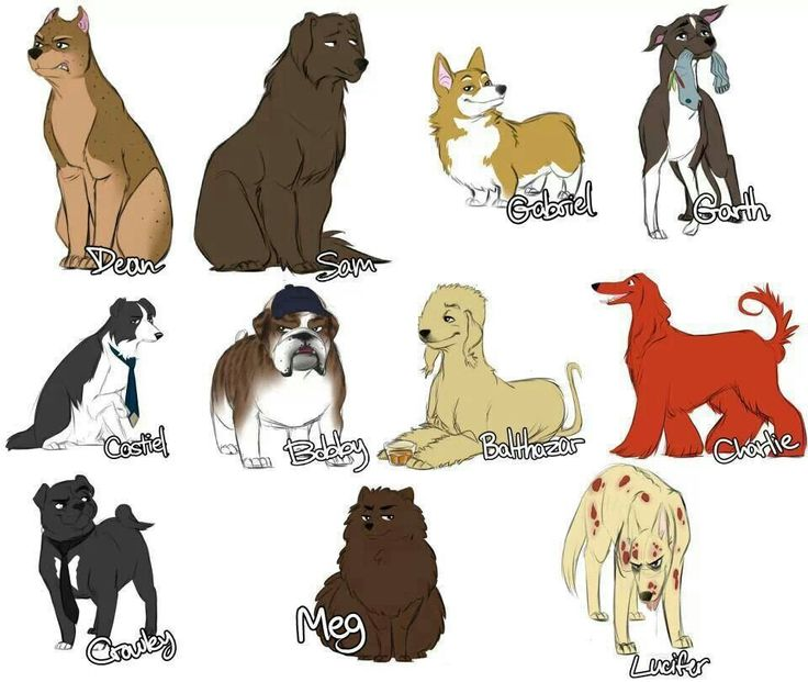 Supernatural cast as dogs, too cute! ~Supernatural