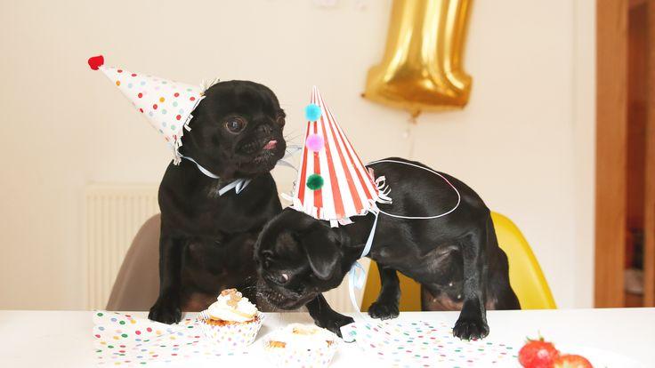 Nala and Buzz's 2nd birthday 2016 so cute!