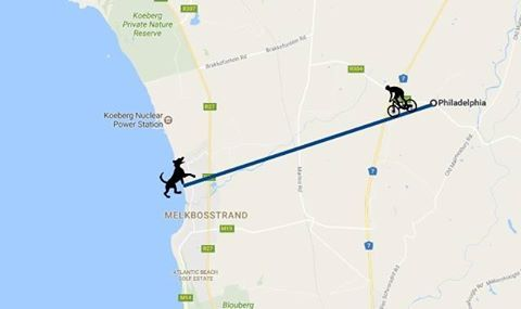 The riders just passed Philadelphia - 20km to the finish at Melkbosstrand (Strand Street parking)!  The riders are nearly there. Doing it FAW the animals. You are all amazing!  THANK YOU to everyone who have donated!  It is so easy with Back-A-Buddy: you can donate with credit card, EFT, or PayPal - all secure pages - and locally or from overseas.