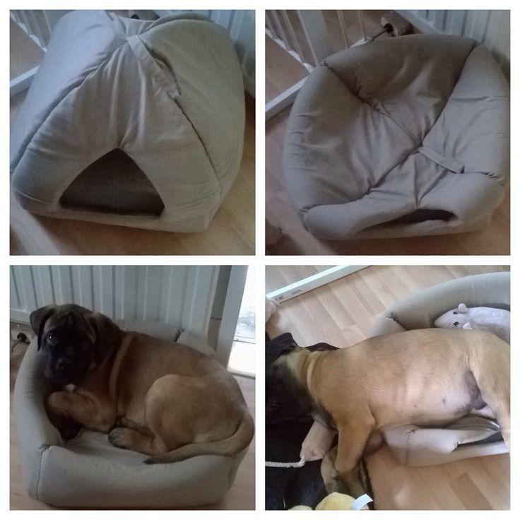 DIY:Kissan majasta kätevästi koiran peti