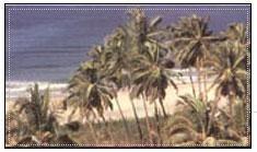 MTDC Velneshwar - Ratnagiri / Maharashtra