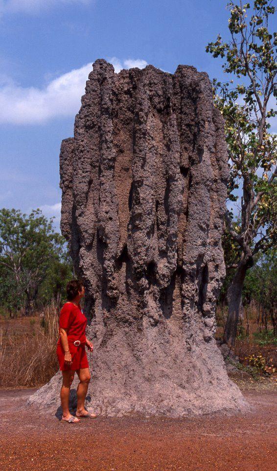 Termite Mound, Outback, Australia, by Jim MacLaren