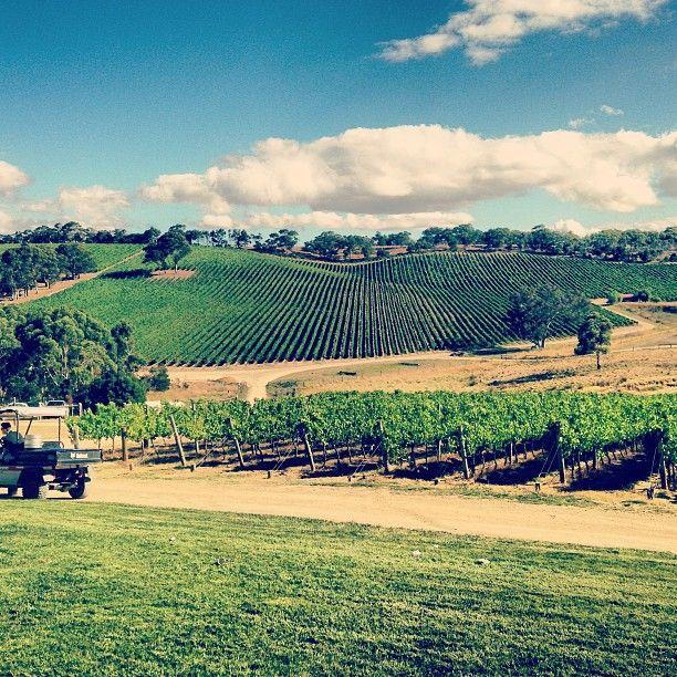 #winery #vineyards #adelaide #australia