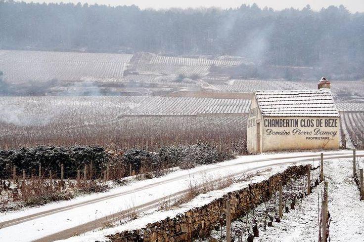 Test av Polets nye viner fra Burgund #burgund #vinguide #smak
