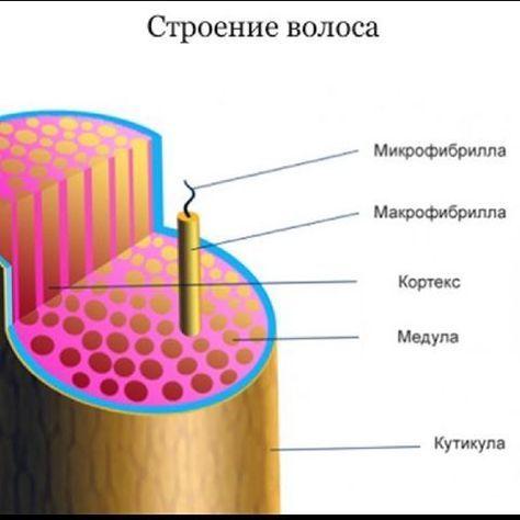 """Anatomy and physiology of hair. Part 1.  Анатомия и физиология волос. Разберём строение волос ,чтобы дальше дальнейшие термины были вам всем понятны ��Как я вам и говорил :""""дальше будет интереснее""""- все к этому и идёт )) И так первые волосяные фолликулы появляются на бровях ,верхней губе и подбородке примерно на 9 неделе эмбрионального развития❗️К 22 неделе вся поверхность тела ,за исключением ладоней и подошв покрывается 5 миллионами фолликулов ❗️Первый волосяной покров,произведённый этими…"""
