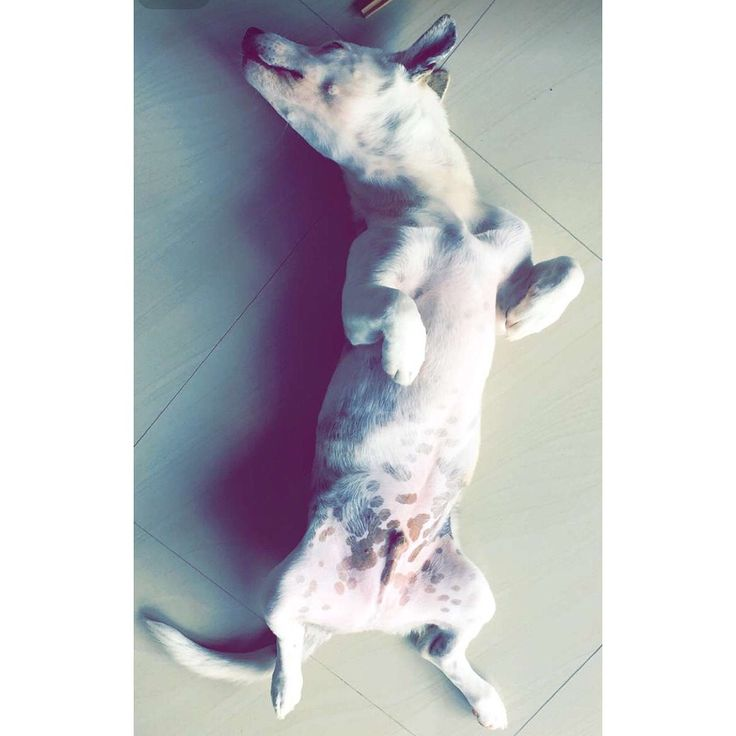 • This is how Bowie sleeps •