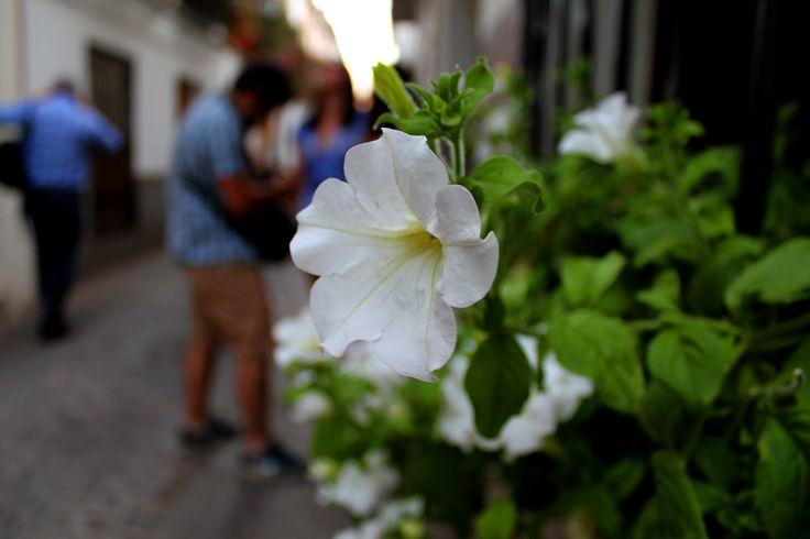 #callejeando #callejero #calle #sol #ceremonia #concursos #cruces #crucesdemayo #flores #patios #patiosdecórdoba #tradición #mayo #mayocordobés #cordoba #andalucia