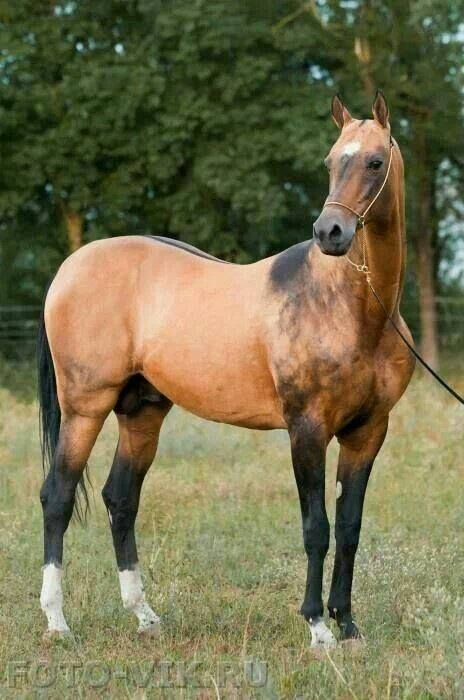 Best Horse     Images On   Beautiful Horses