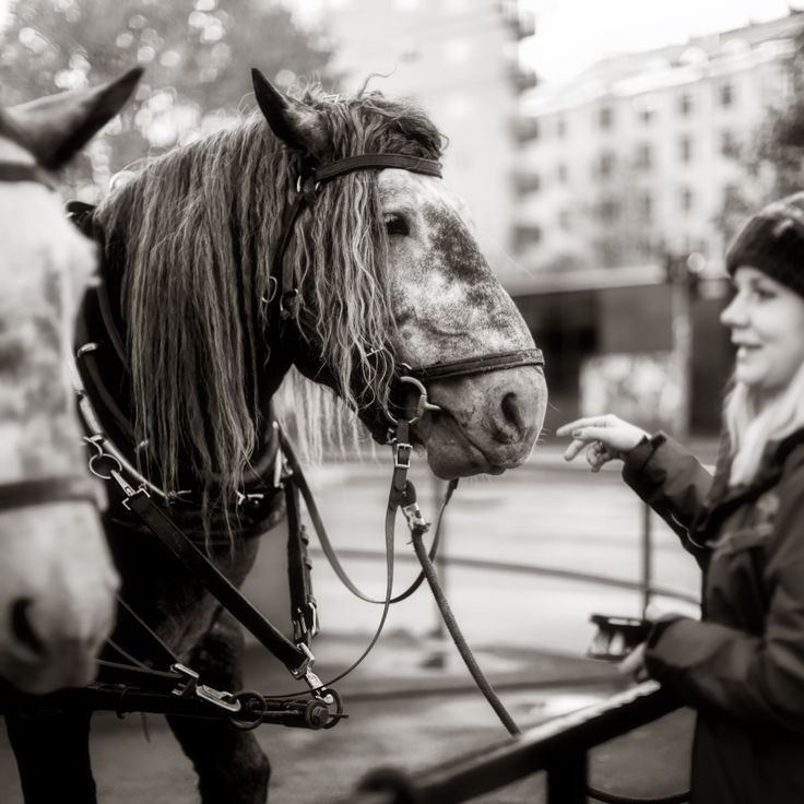 Horses - Sörnäinen, Helsinki, Finland - null