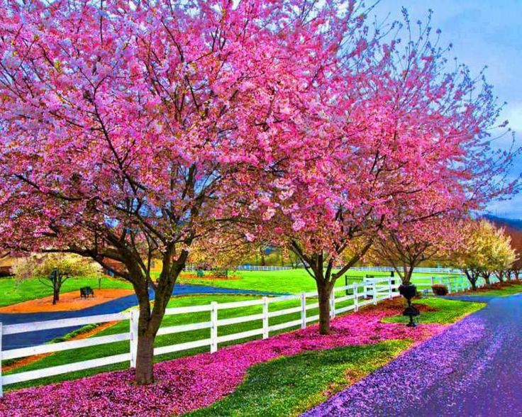 Pinks and Purple in Gardens