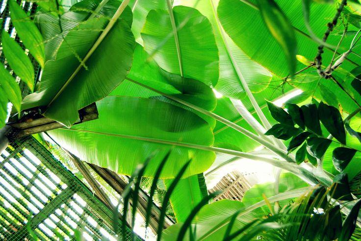 #leaves #inspiration #garden