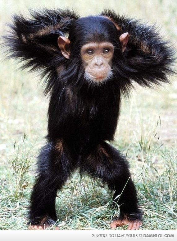 Monkey / too cute !! I'm obsessed with Monkeys aha they have been my fav animal since as long as I can remember