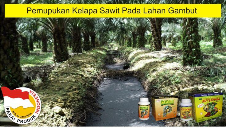 pemupukan-kelapa-sawit-pada-lahan-gambut-dengan-pupuk-organik-cair-padat-natural-nusantara-hasil-maksimal