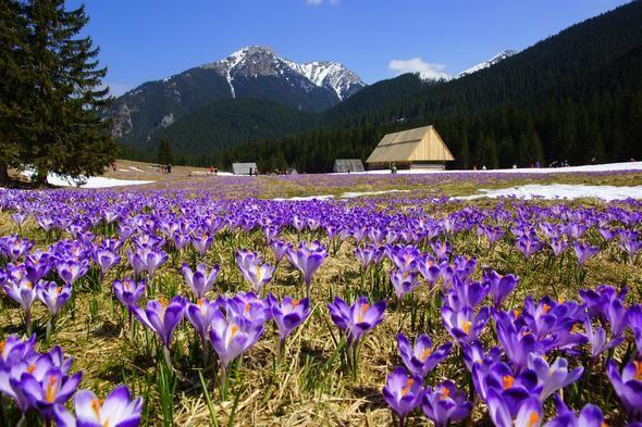 Tatry, Dolina Chochołowska