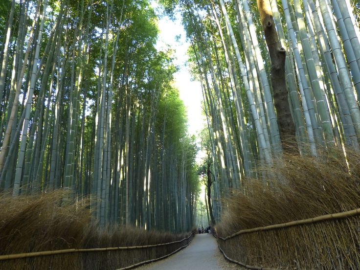 Strolling through the bamboo grove at Arashiyama, Japan with www.toursgallery.com