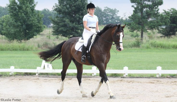 Keys to Suppleness~Exercises to help improve your horse's suppleness and his ability to bend comfortably under saddle.