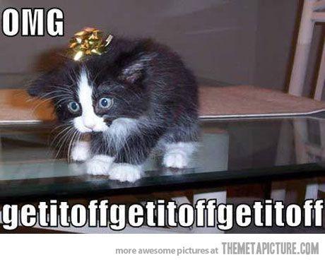 Present Cat